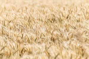 cereals-6508088_1280
